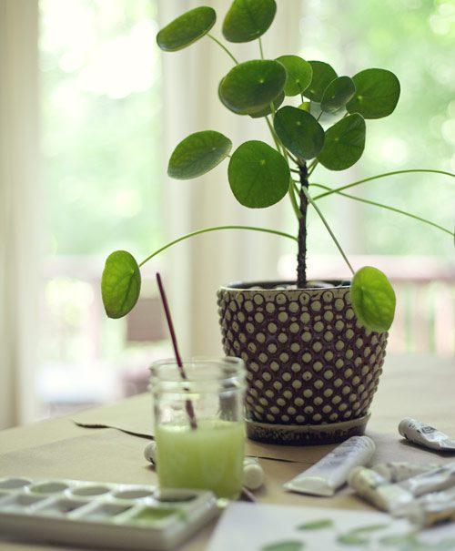 Pilea peperomioides green Living Nordic Butik