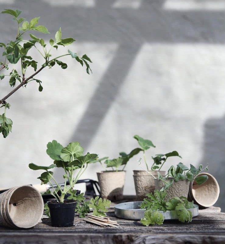 Zimmerpflanzen und Vasen Anna Kubel Nordic Butik