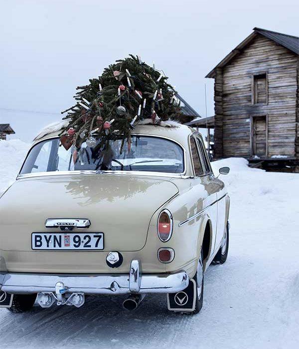 5 Tipps für die Weihnachtsbaumpflege Nordic Butik