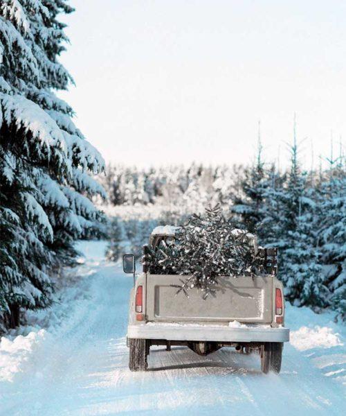 Weihnachtsbaum entsorgen Nordic Butik