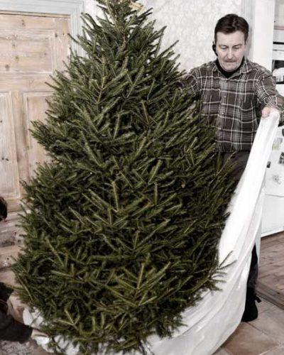 Leb wohl, Weihnachtsbaum! So wirst Du den Christbaum los